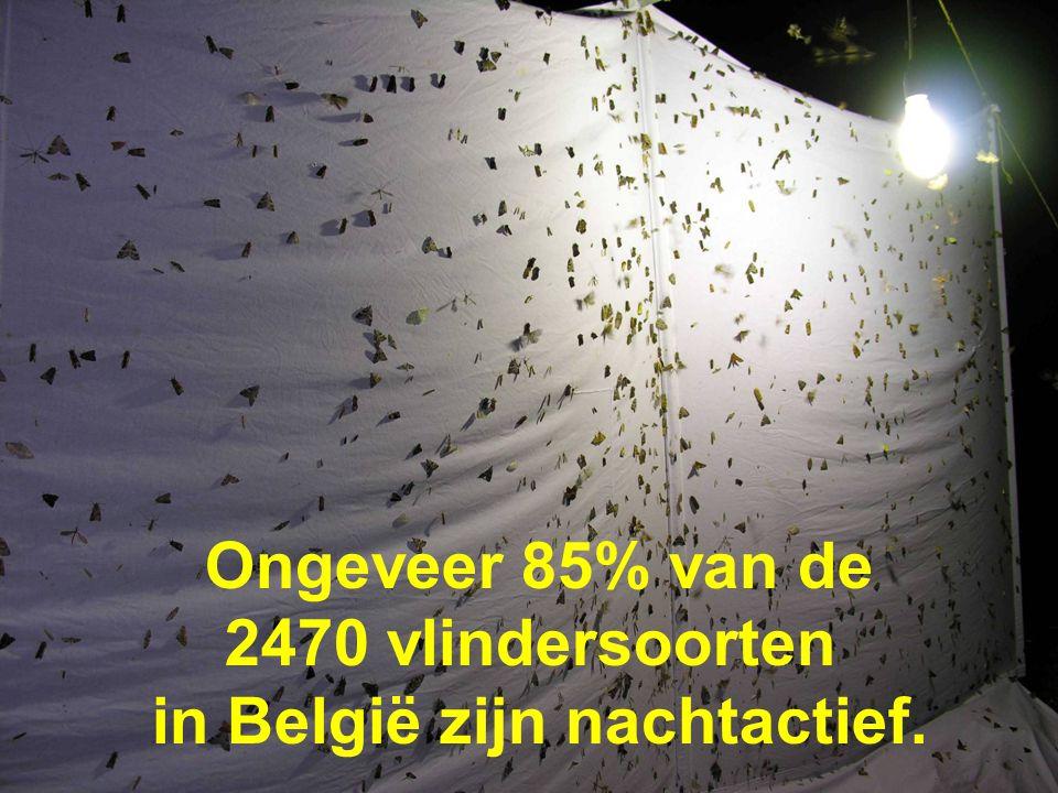in België zijn nachtactief.