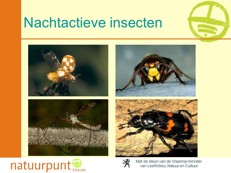 Nachtactieve insecten