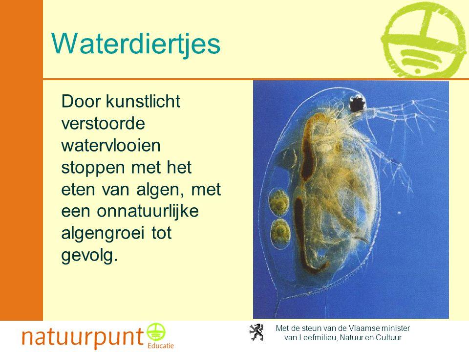 Waterdiertjes Door kunstlicht verstoorde watervlooien stoppen met het eten van algen, met een onnatuurlijke algengroei tot gevolg.