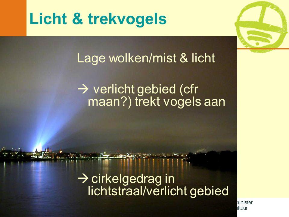 Licht & trekvogels Lage wolken/mist & licht