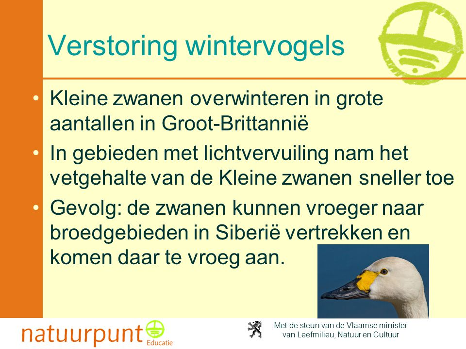 Verstoring wintervogels