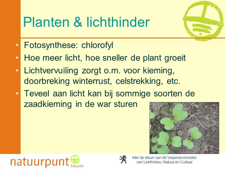 Planten & lichthinder Fotosynthese: chlorofyl
