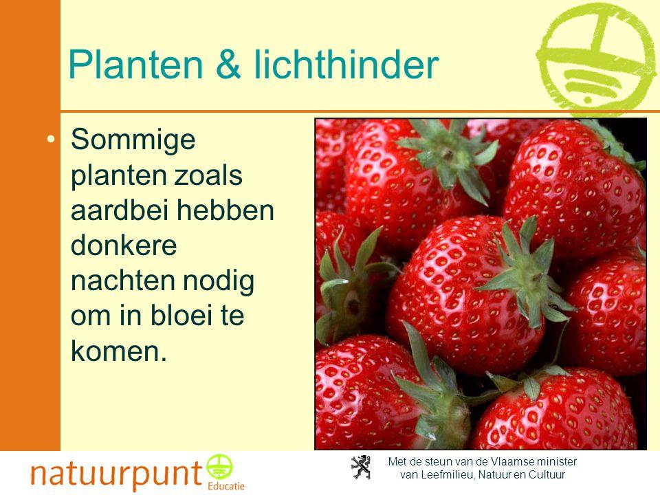 Planten & lichthinder Sommige planten zoals aardbei hebben donkere nachten nodig om in bloei te komen.
