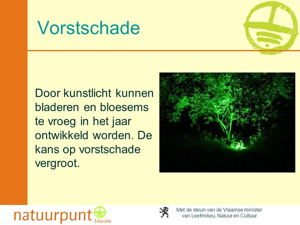 Vorstschade Door kunstlicht kunnen bladeren en bloesems te vroeg in het jaar ontwikkeld worden. De kans op vorstschade vergroot.