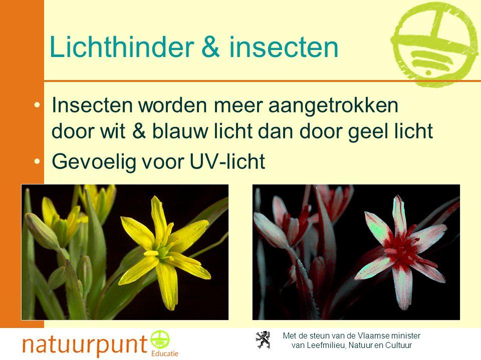 Lichthinder & insecten