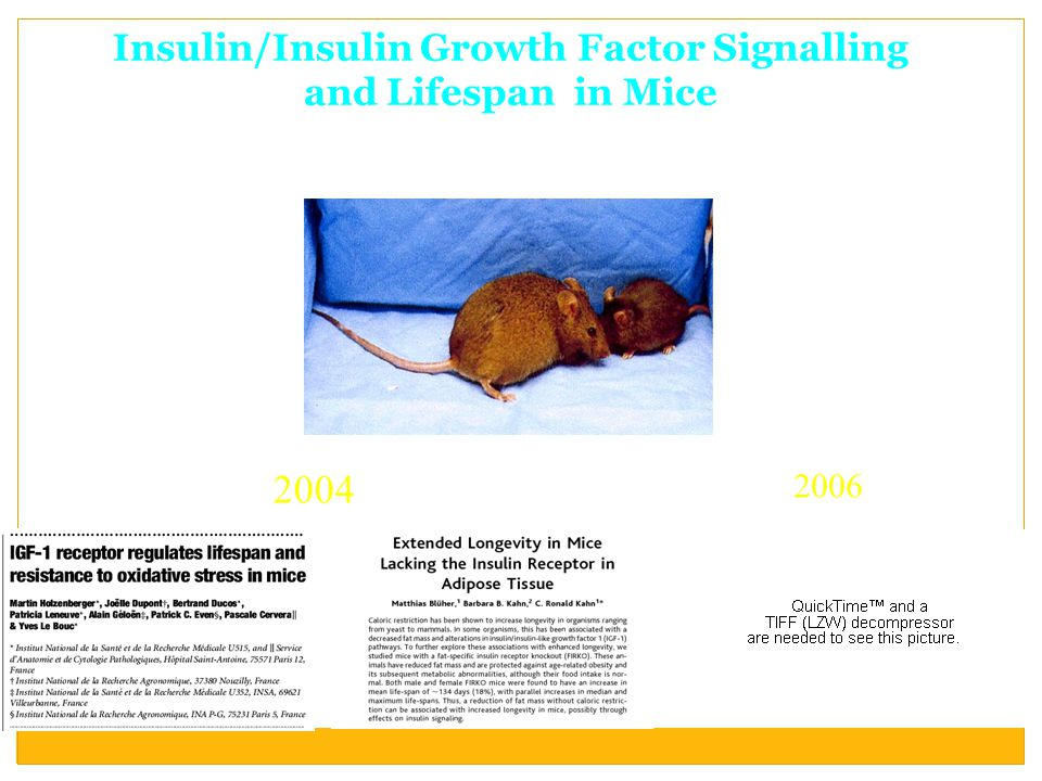Insulin/Insulin Growth Factor Signalling and Lifespan in Mice