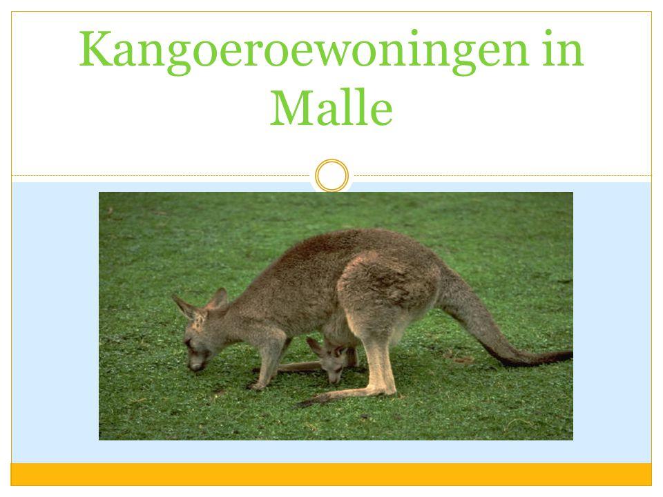 Kangoeroewoningen in Malle