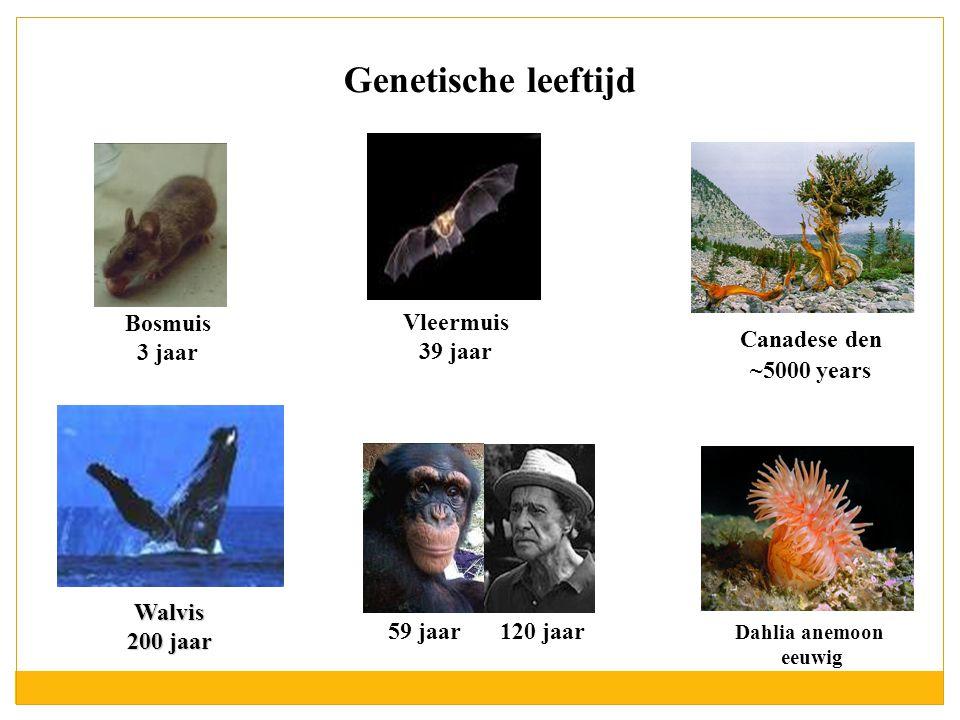 Genetische leeftijd Vleermuis 39 jaar Bosmuis 3 jaar Canadese den