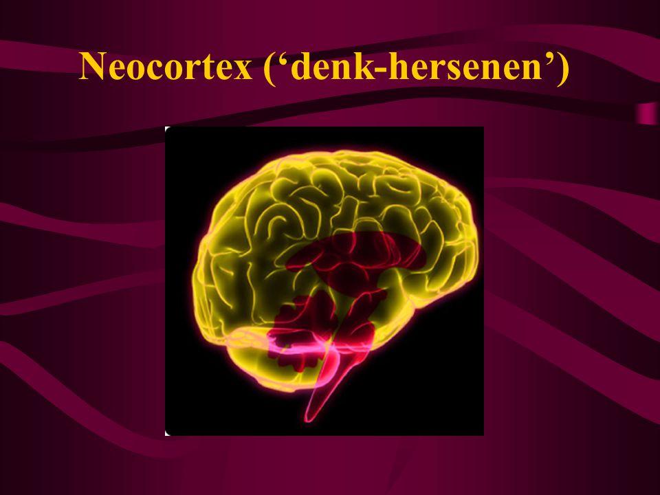 Neocortex ('denk-hersenen')