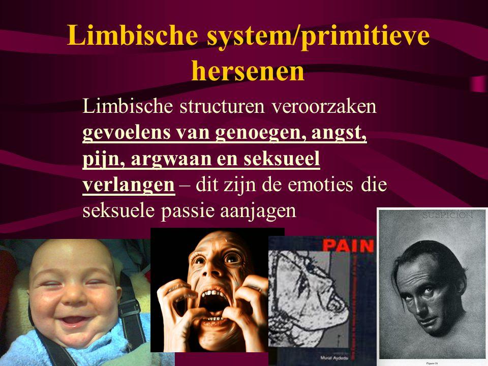 Limbische system/primitieve hersenen