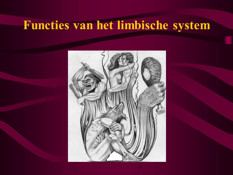 Functies van het limbische system