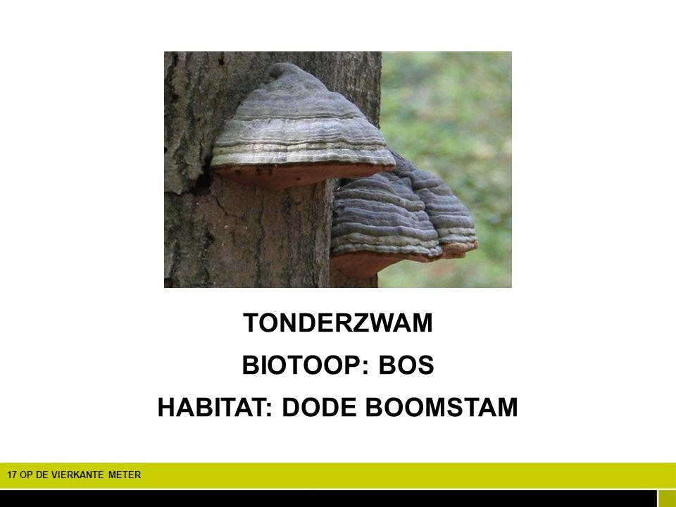 HABITAT: DODE BOOMSTAM