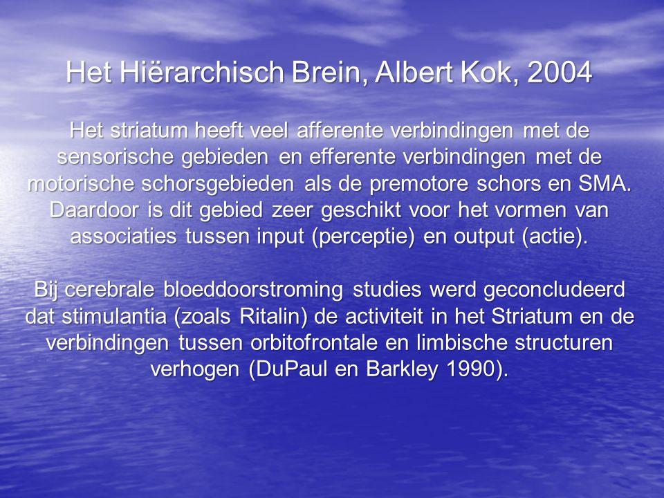 Het Hiërarchisch Brein, Albert Kok, 2004