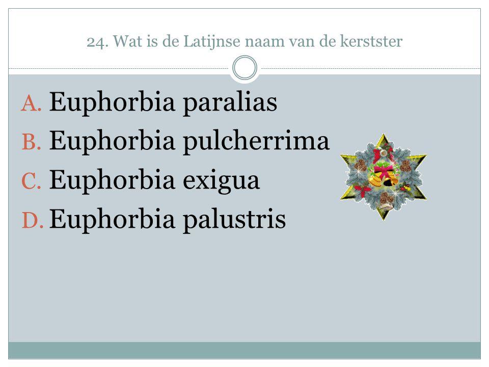24. Wat is de Latijnse naam van de kerstster