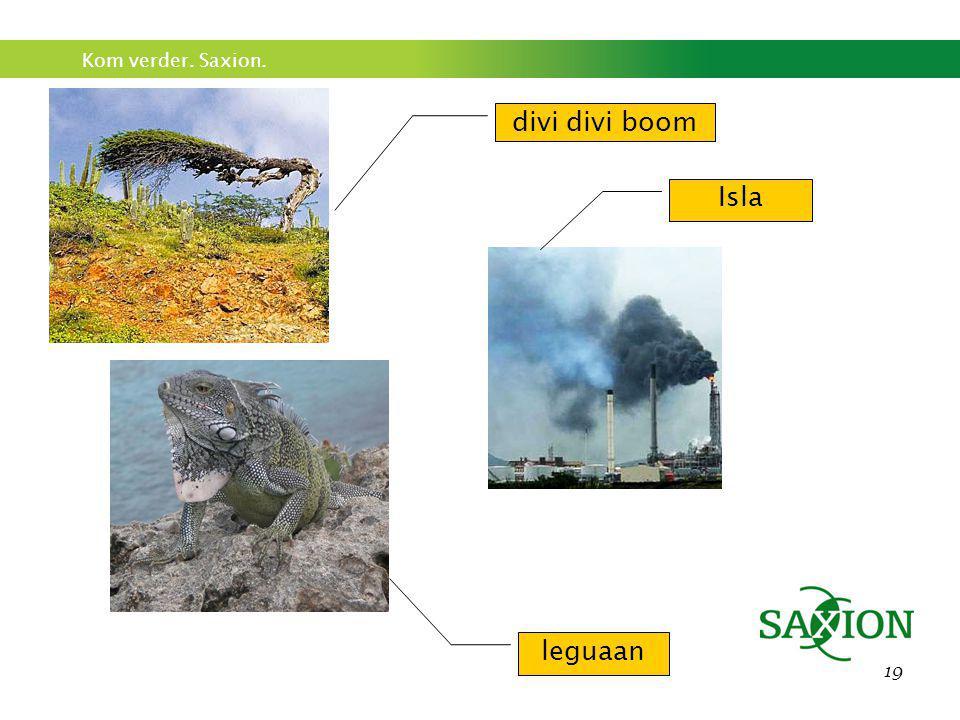 divi divi boom Isla leguaan