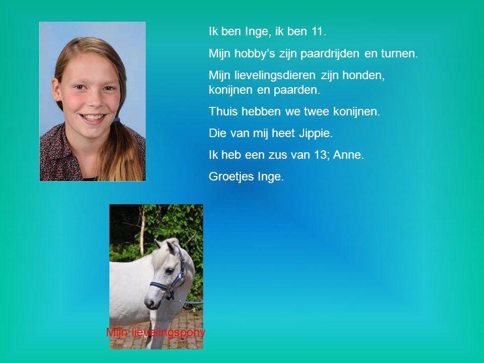 Ik ben Inge, ik ben 11. Mijn hobby's zijn paardrijden en turnen. Mijn lievelingsdieren zijn honden, konijnen en paarden.