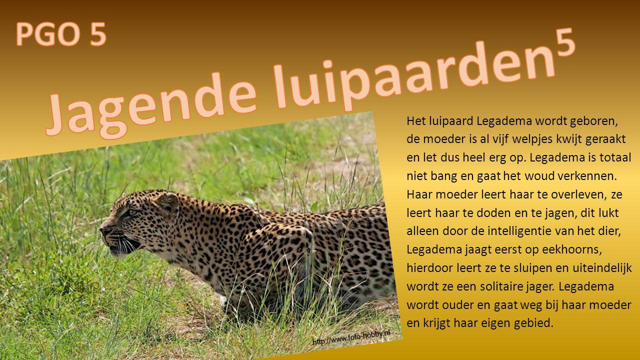 Jagende luipaarden5 PGO 5