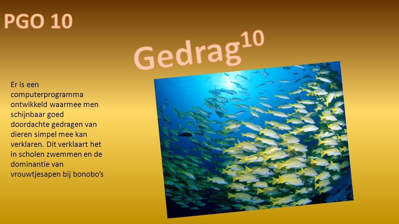 PGO 10 Gedrag10.