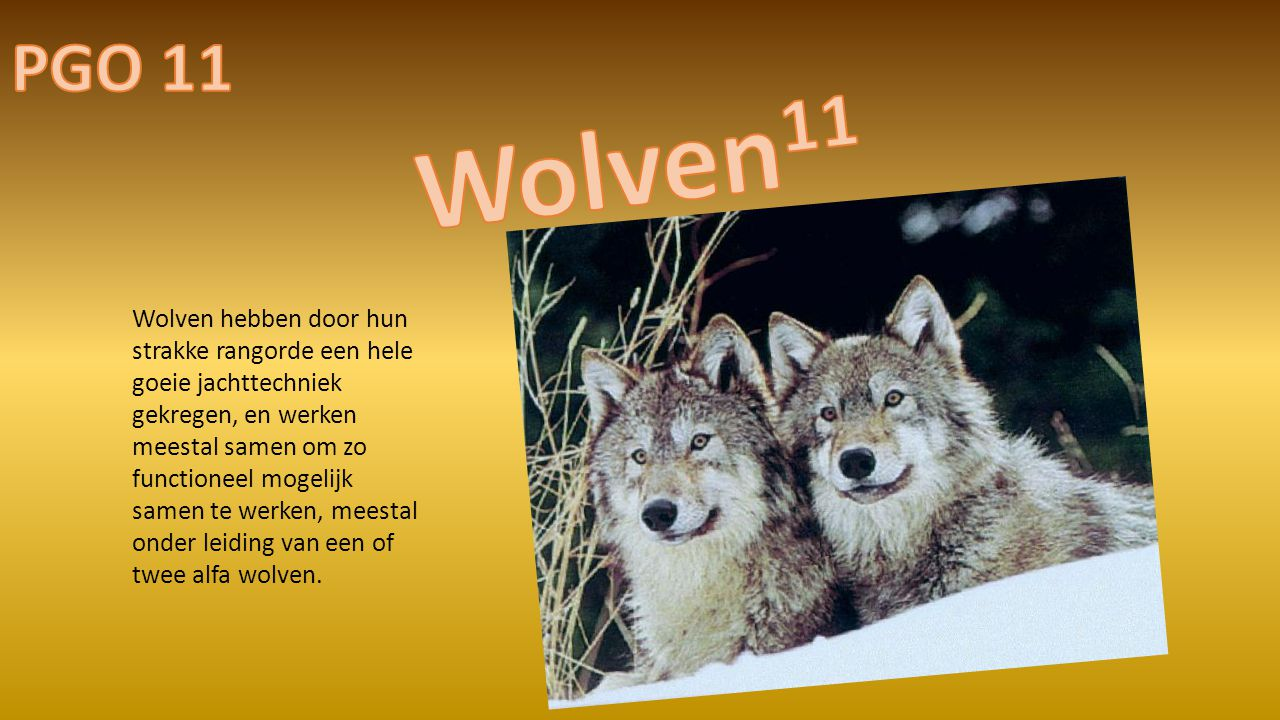 PGO 11 Wolven11.