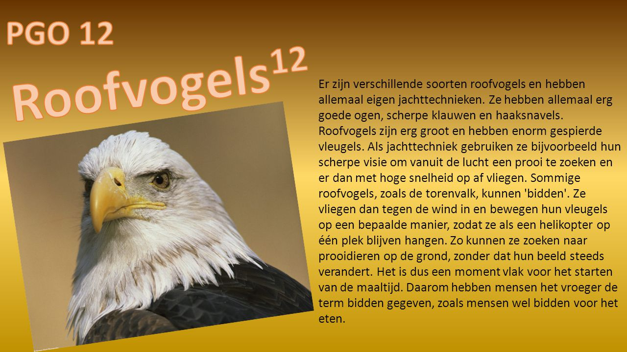PGO 12 Roofvogels12.