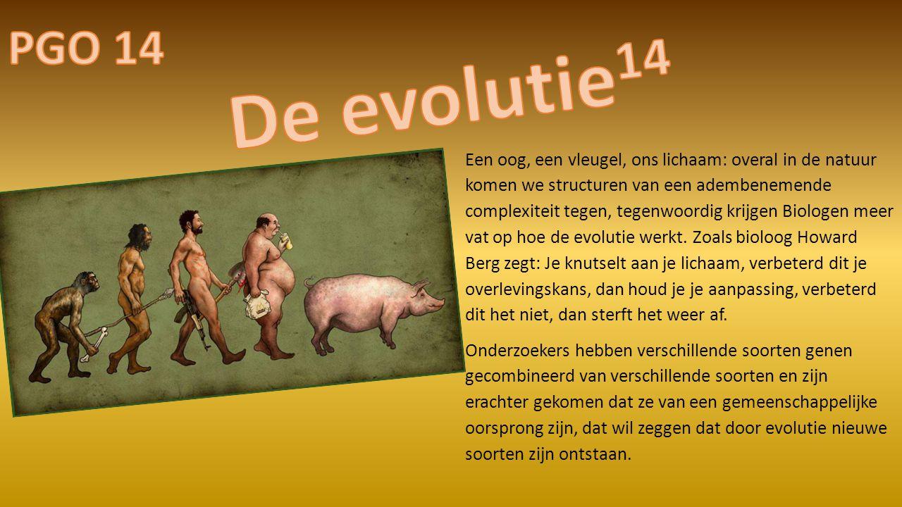 PGO 14 De evolutie14.