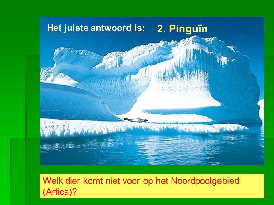 2. Pinguïn Het juiste antwoord is: