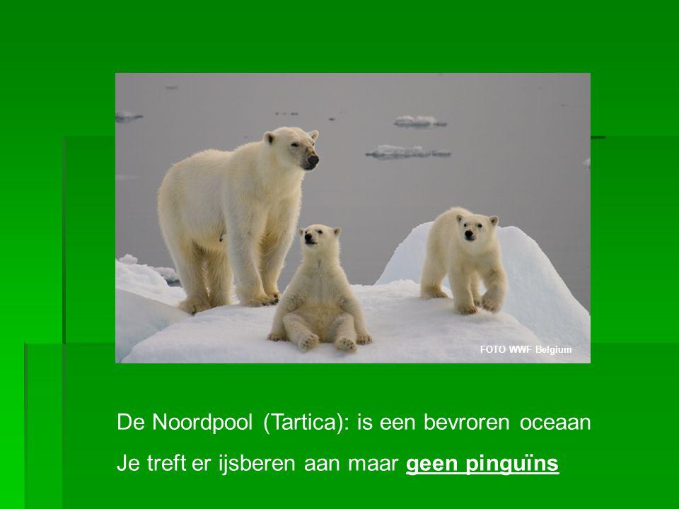 De Noordpool (Tartica): is een bevroren oceaan