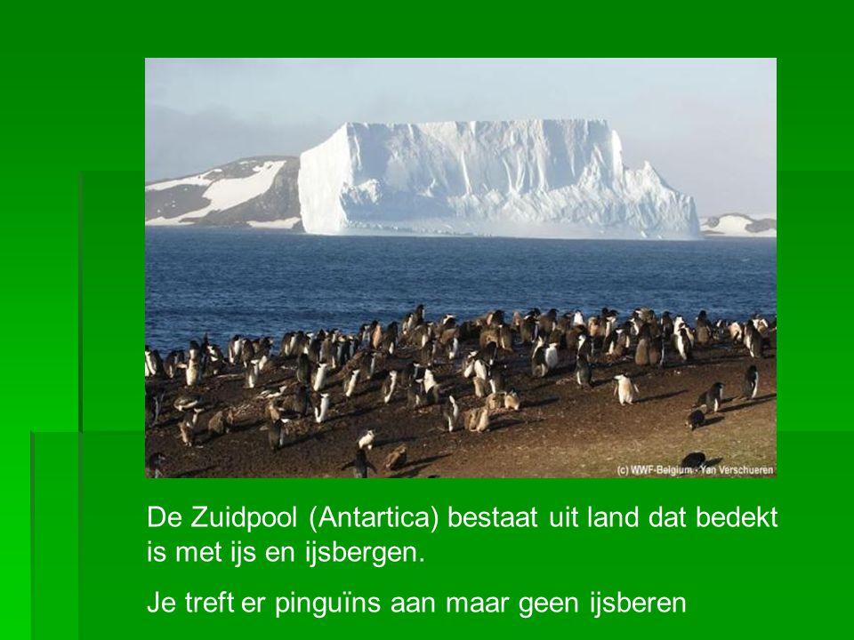De Zuidpool (Antartica) bestaat uit land dat bedekt is met ijs en ijsbergen.