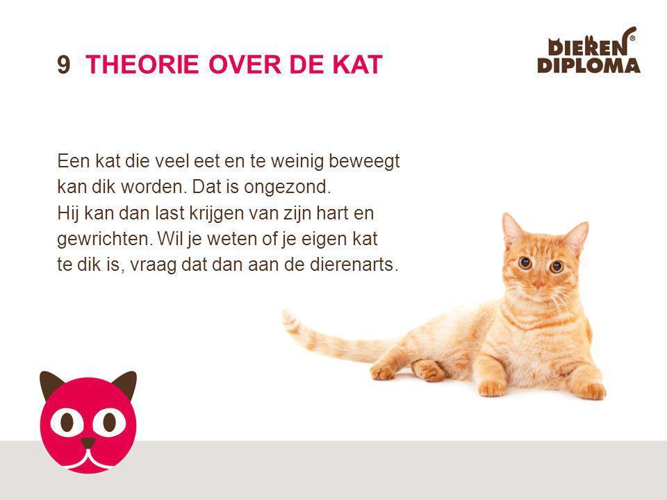 9 THEORIE OVER DE KAT Een kat die veel eet en te weinig beweegt