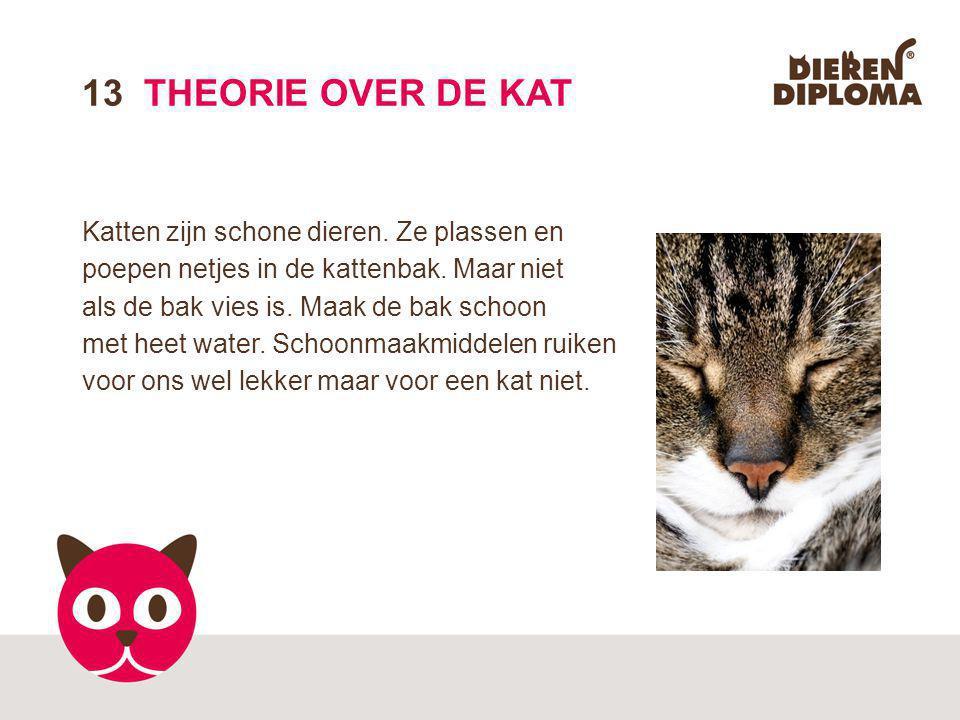 13 THEORIE OVER DE KAT Katten zijn schone dieren. Ze plassen en poepen netjes in de kattenbak. Maar niet.