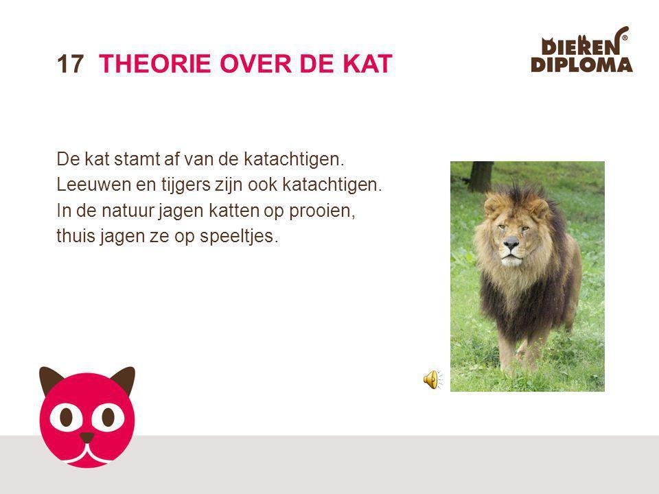 17 THEORIE OVER DE KAT De kat stamt af van de katachtigen.