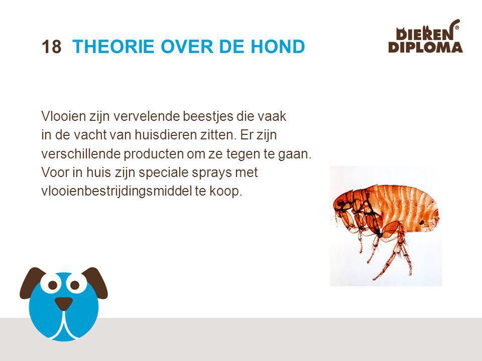 18 THEORIE OVER DE HOND Vlooien zijn vervelende beestjes die vaak