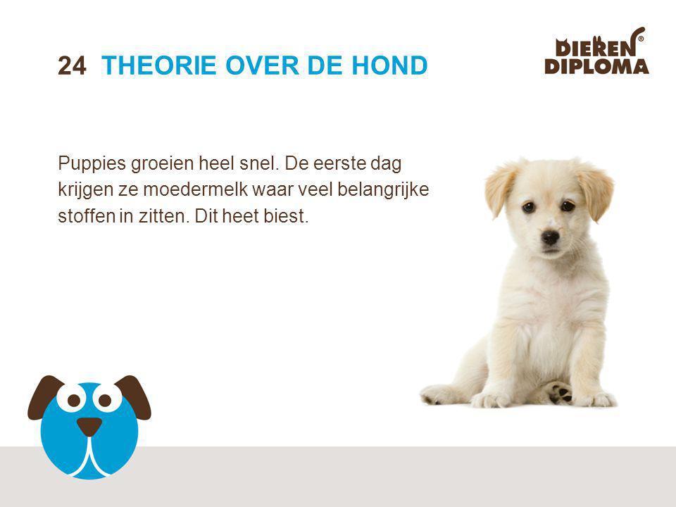 24 THEORIE OVER DE HOND Puppies groeien heel snel.