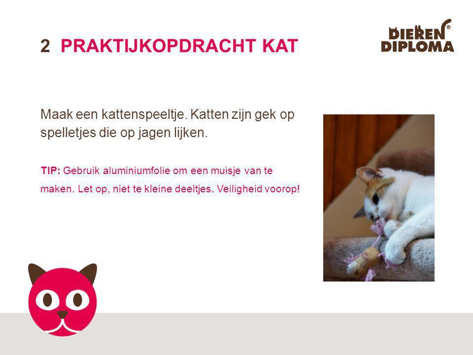 2 PRAKTIJKOPDRACHT KAT Maak een kattenspeeltje. Katten zijn gek op