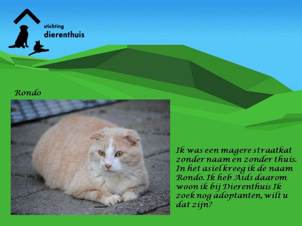 Rondo Ik was een magere straatkat zonder naam en zonder thuis.