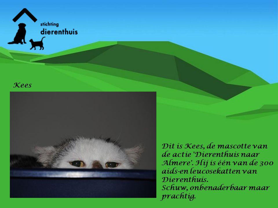 Kees Dit is Kees, de mascotte van de actie Dierenthuis naar Almere . Hij is één van de 300 aids-en leucosekatten van Dierenthuis.