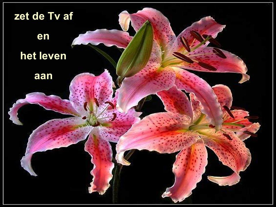 zet de Tv af en het leven aan