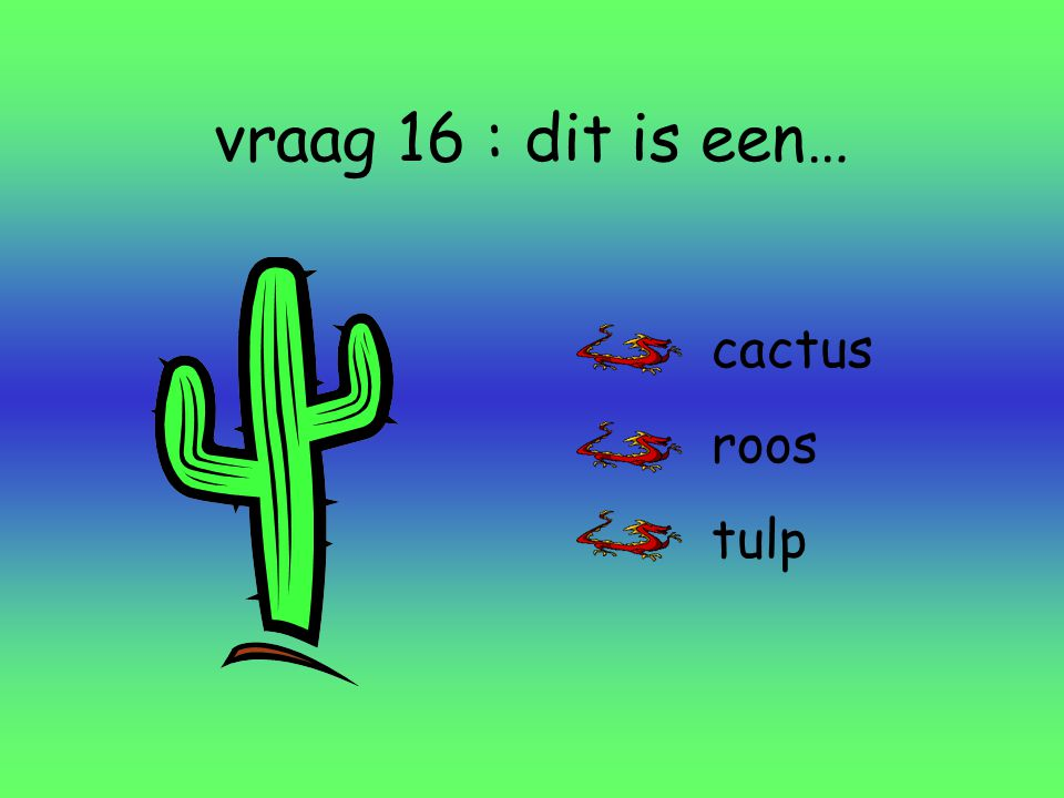 vraag 16 : dit is een… cactus roos tulp