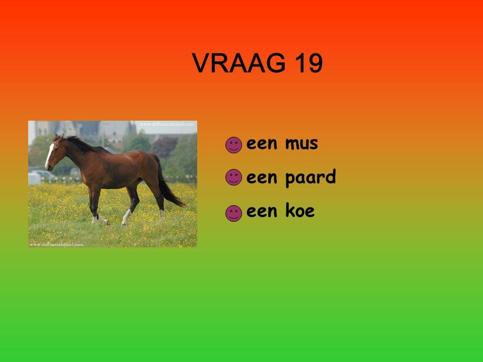 VRAAG 19 een mus een paard een koe