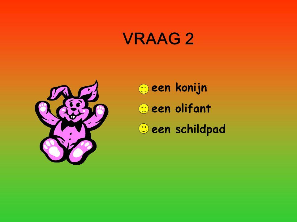 VRAAG 2 een konijn een olifant een schildpad
