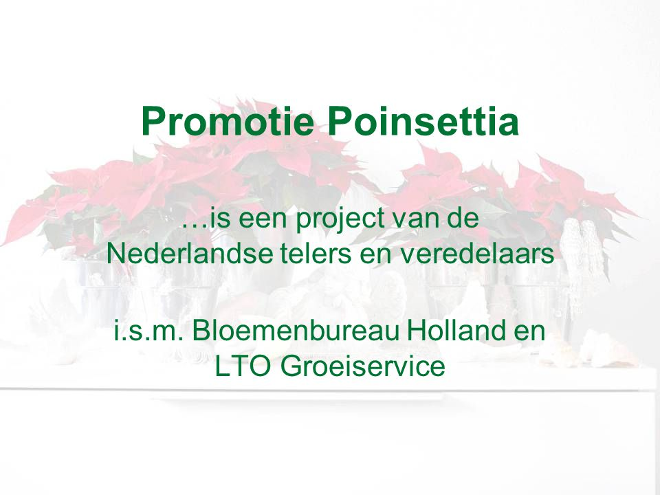Promotie Poinsettia …is een project van de Nederlandse telers en veredelaars.