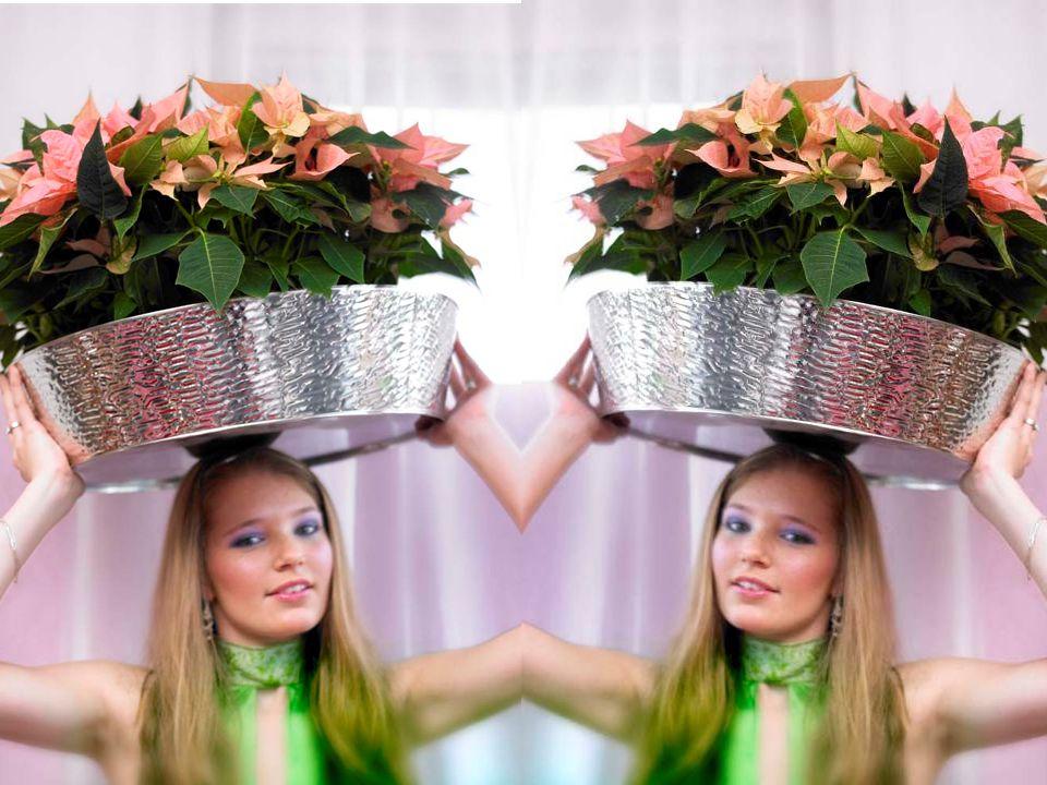 Promotie materiaal beschikbaar op www.flowercouncil.org/nl