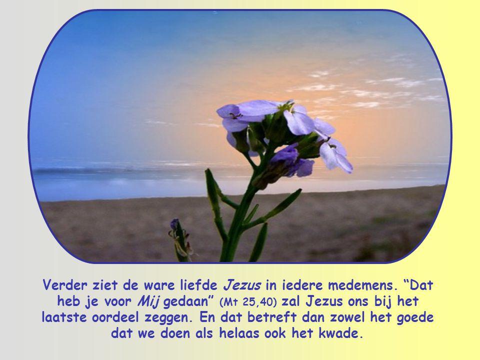 Verder ziet de ware liefde Jezus in iedere medemens