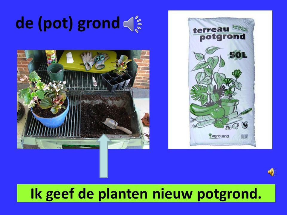 Ik geef de planten nieuw potgrond.