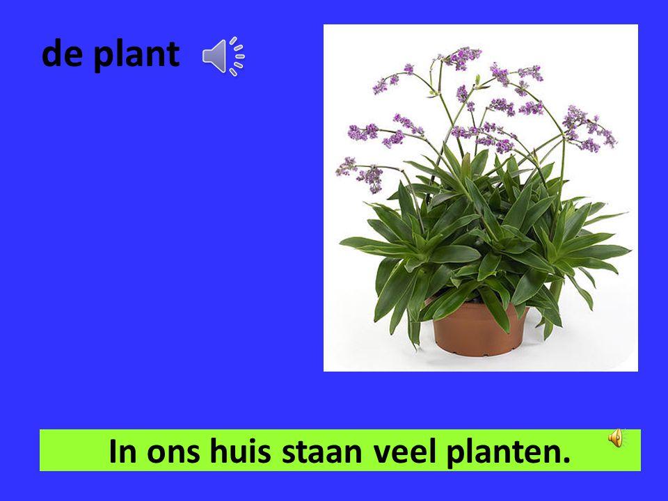 In ons huis staan veel planten.
