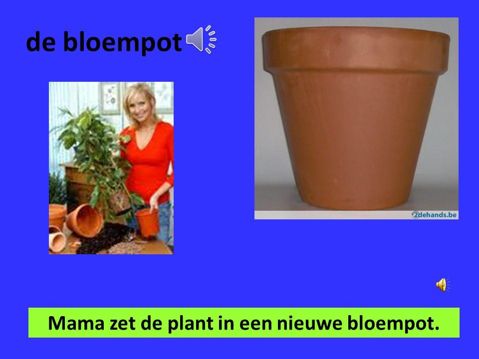 Mama zet de plant in een nieuwe bloempot.