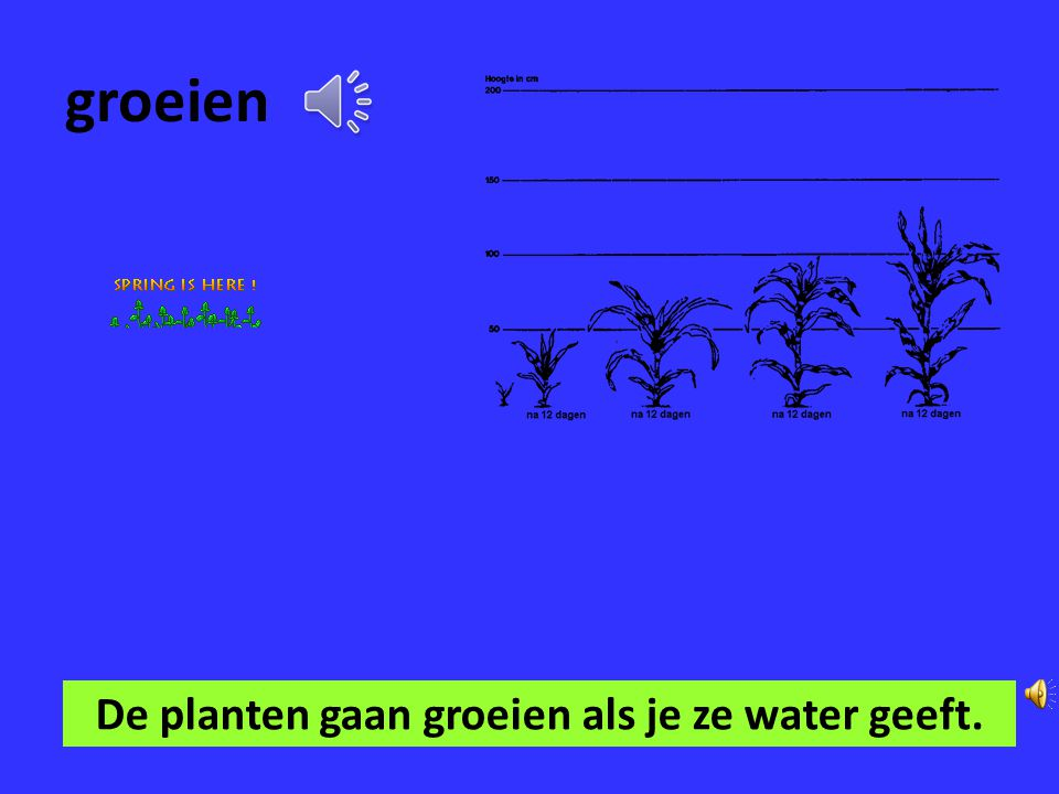 De planten gaan groeien als je ze water geeft.