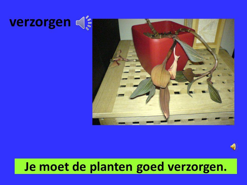 Je moet de planten goed verzorgen.