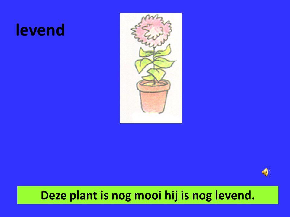 Deze plant is nog mooi hij is nog levend.