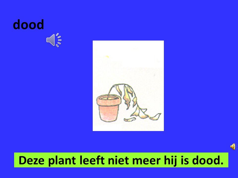 Deze plant leeft niet meer hij is dood.